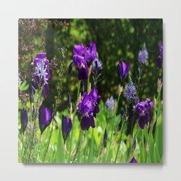 Iris Field Metal Print