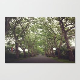 Hamptons Trees Canvas Print