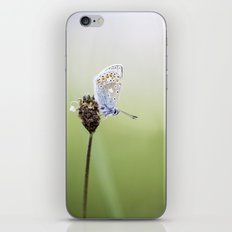 Common Blue Butterfly iPhone & iPod Skin