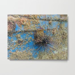 Sea Urchin on a Man-made Wreck Metal Print