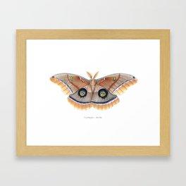 Polyphemus Moth Framed Art Print