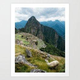 Alpaca Picchu Art Print