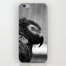 Grey Parrot iPhone & iPod Skin
