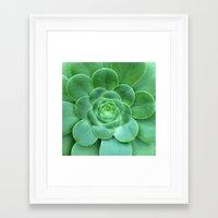 succulent Framed Art Prints featuring Succulent  by Laura Ruth