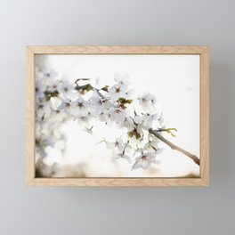 Cherry Tree Blossoms Framed Mini Art Print