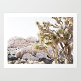 Close Up Of Joshua Tree In Desert Art Print