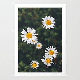 Daze-y Daisies Art Print