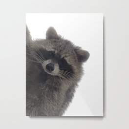 Young Raccoon Metal Print