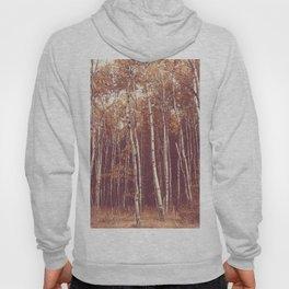Autumn in Maine x Birch Forest Hoody