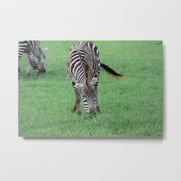 Stripes 1 Metal Print