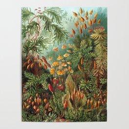 Vintage Plants Decorative Nature Poster