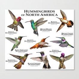 Hummingbirds of North America Canvas Print