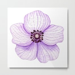 One Purple Flower Metal Print