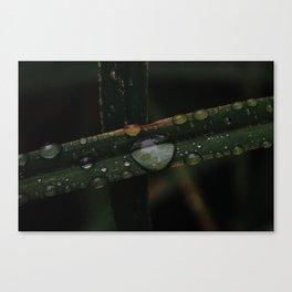 Dark Afternoon in the Garden Canvas Print