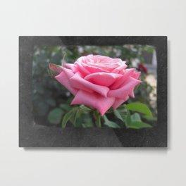Pink Roses in Anzures 6 Blank P4F0 Metal Print
