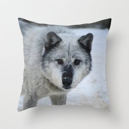Lone wolf roams the Canadian Rockies Throw Pillow
