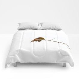 bea eater Comforters