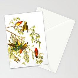 American Crossbill Vintage Bird Illustration Stationery Cards