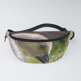 baby gosling (canada goose) Fanny Pack