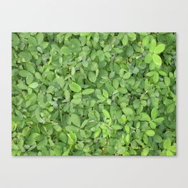 Abstract photo of green leaves Canvas Print