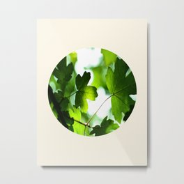Green Baby Maple Leaves Round Photo Metal Print