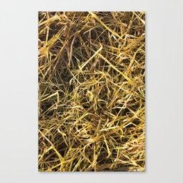 yellowed wheat Canvas Print