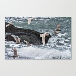Gulls shop for Dinner Canvas Print