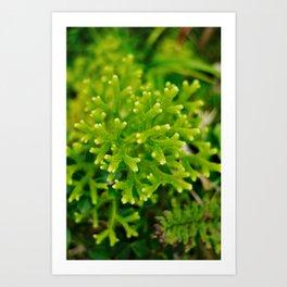 Lichen Close Up Art Print