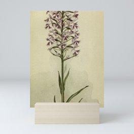 Vintage Botanical Print - Large Purple-Fringed Orchid Mini Art Print