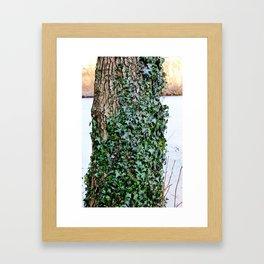 Covered in Ivy Framed Art Print