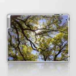Oak Canopy Laptop & iPad Skin
