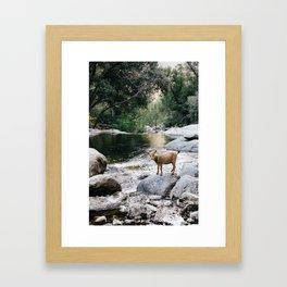 goat creek Framed Art Print