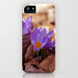 Concept nature : Fera lilium iPhone Case
