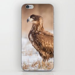 Young White Tailed Eagle iPhone Skin