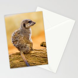 Meerkat (Color) Stationery Cards