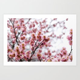 The First Bloom Art Print