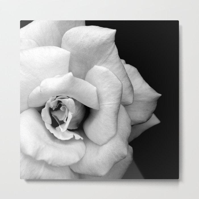 Rose Monochrome Metal Print