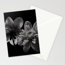 Dahlia's floral black and white photograph / black and white photography   Stationery Cards