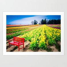 Bench and Tulips, Woodburn, Oregon Art Print