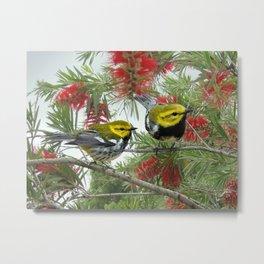 Black-throated Green Warbler Metal Print