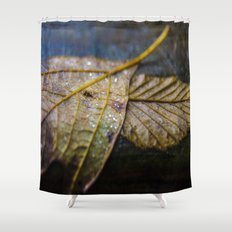 Water on a fall leaf  Shower Curtain