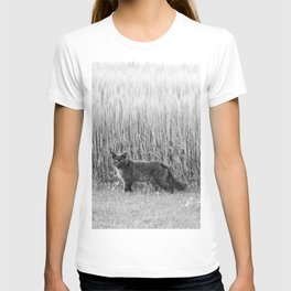 Fluffy cat near the crop field Cat03 T-shirt