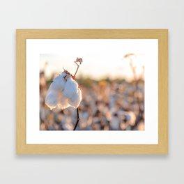 Cotton Field 14 Framed Art Print