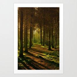 Caminho na natureza Art Print