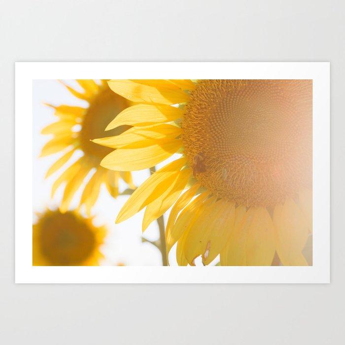 Sunflowers and Sunshine Kunstdrucke