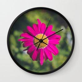 isolated fuchsia gerbera Wall Clock