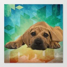 Boerboel puppy - South African Mastiff Canvas Print