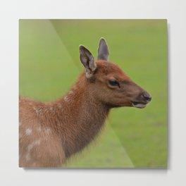 Baby Elk Metal Print