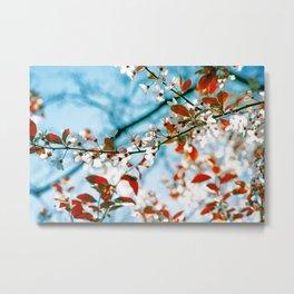 Spring Blossom III Metal Print