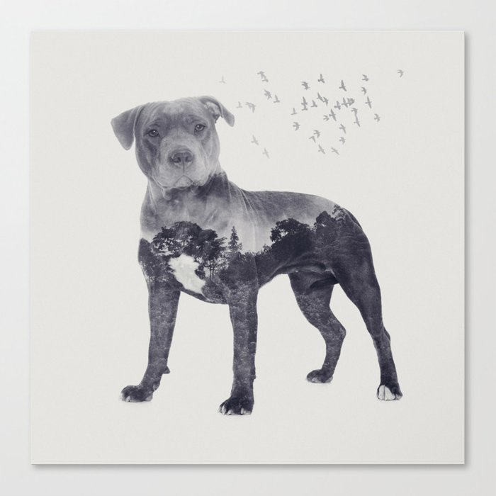 American Staffordshire Terrier - Amstaff Canvas Print by k9printart